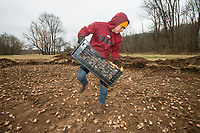 NWA Democrat-Gazette/BEN GOFF @NWABENGOFF<br /> Jose Anzora with Fresh-N-Green Landscape Company based in Springdale plants daffodil bulbs Tuesday, Dec. 4, 2018, at Lake Bella Vista Park in Bentonville. A Walton Family Foundation grant at the recommendation of Steuart Walton is supporting a beautification project to plant 300,000 daffodil bulbs at sites in Bentonville this week. The 300,000 bulbs include 20 varieties of daffodils. Sites to be planted include the North Bentonville trail, sites on the Razorback Regional Greenway, the Seed Tick Shuffle trail at Slaughter Pen, the traffic circle on John DeShields Boulevard and Orchards Park.