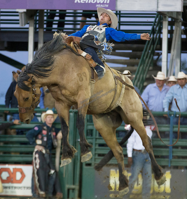 Mitch Pollock rides in the Saddle Bronc Riding event during the Reno Rodeo on Sunday, June 23, 2019.