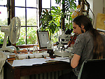 Principal Entomologist Andrew Salisbury undertaking microscope work on the Plants for Bugs project.