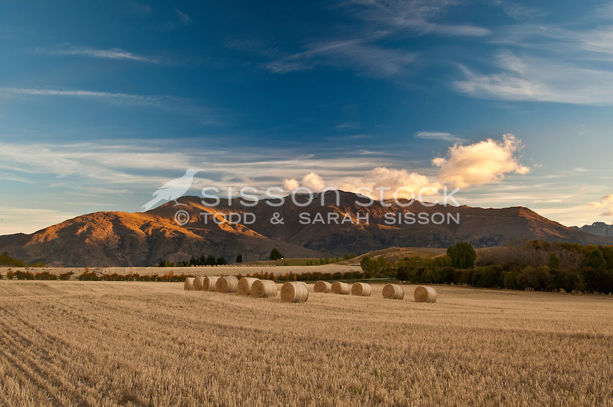 Hay bales in a field at sunset, Wakatipu Basin, near Queenstown, Central Otago, South Island, New Zealand