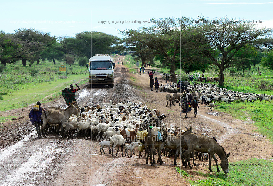 UGANDA, Karamoja, Kotido, Karamojong tribe, shepherd with cattle on the road / Hirten mit Vieh auf der Sandpiste