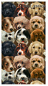 GIORDANO, CUTE ANIMALS, LUSTIGE TIERE, ANIMALITOS DIVERTIDOS, paintings+++++,USGI2505CN,#ac#, EVERYDAY