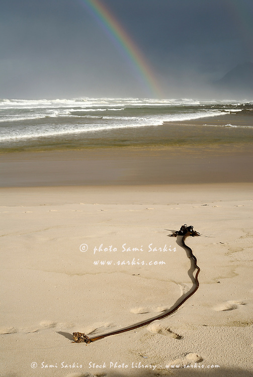 Kelp on sand and Rainbow on Ocean by cloudy day, Hermanus, South Western Cape, South Africa