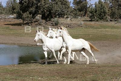 Silverado JC (left), Rubiana Lace (right), Arcticanna (behind Rubiana Lace) scenic, mood, horse racing, pretty, racehorse, horse, equine, racetrack, track, saratoga