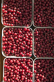 USA, Oregon, Ashland, Pennington Farms Guomi Berries for sale at the Rogue Valley Growers and Crafters Market