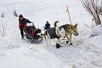 Aliy Zirkle on the frozen Yukon River approaching Ruby on Saturday morning during the 2008 Iditarod