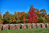 Hay Bales in Autumn - We got lost looking for some kind of a park and came across these hay bales with these trees popping with fall colors in the back road of the Ozark.  It was almost as though they did it on purpose but we will never probably know.  We loved the neat rows of hay bales and then these colorful fall maples trees in reds, oranges, and green telling us that autumn is here.