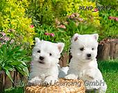 Marek, ANIMALS, REALISTISCHE TIERE, ANIMALES REALISTICOS, dogs, photos+++++,PLMP3213,#a#, EVERYDAY