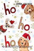 Isabella, CHRISTMAS ANIMALS, WEIHNACHTEN TIERE, NAVIDAD ANIMALES, paintings+++++,ITKE551930,#XA#