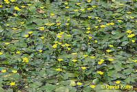0723-1014  Full Bloom Water Lilies in Ornamental Pond  © David Kuhn/Dwight Kuhn Photography