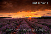 Tom Mackie, LANDSCAPES, LANDSCHAFTEN, PAISAJES, photos,+Europa, Europe, European, France, Plateau de Valensole, Provence, Tom Mackie, dramatic outdoors, french, horizontal, horizont+als, lavender, mood, moody, scenic, sunrise, sunrises, sunset, sunsets, time of day,Europa, Europe, European, France, Plateau+de Valensole, Provence, Tom Mackie, dramatic outdoors, french, horizontal, horizontals, lavender, mood, moody, scenic, sunri+se, sunrises, sunset, sunsets, time of day+,GBTM180309-1,#l#, EVERYDAY
