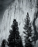 El Capitan detail and foreground pines