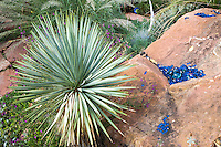 A silver gray Yucca rostrata and some blue glass beads ona large stone make a colofrul combo in Dan Johnson's Denver garden.