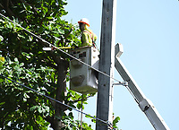DEERFIELD BEACH, FL - JULY 31: A crew is seen trimming trees near power lines as Hurricane Isaias tracks towards Florida in addition to Florida reporting more than 9,007 new COVID-19 cases Friday and 257 deaths on July 31, 2020 in Deerfield Beach, Florida. Credit: mpi04/MediaPunch