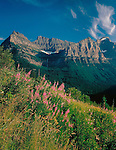 Fireweed at Logan Pass in Glacier National Park, Kalispell, Montana, John offers private photo tours in Glacier National Park and throughout Montana and Colorado. Year-round.