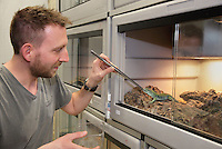 Zookeeper Olivier Marquis feeding a cricket to a lizard in the Vivarium, a controlled area for observing and researching animals, at the new Parc Zoologique de Paris or Zoo de Vincennes, (Zoological Gardens of Paris or Vincennes Zoo), which reopened April 2014, part of the Musee National d'Histoire Naturelle (National Museum of Natural History), 12th arrondissement, Paris, France. Picture by Manuel Cohen