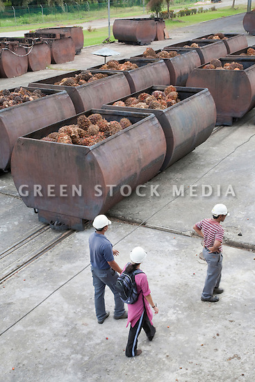 High Angle View of three people near huge metal cages full of oil palm fresh fruit bunches (FFBs) are lined up to enter the mill. The Sindora Palm Oil Mill, owned by Kulim, is green certified by the Roundtable on Sustainable Palm Oil (RSPO) for its environmental, economic, and socially sustainable practices. Johor Bahru, Malaysia
