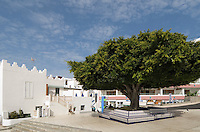 Spain, Canary Islands, La Palma, Puerto Naos: popular resort at the west coast, Bay tree
