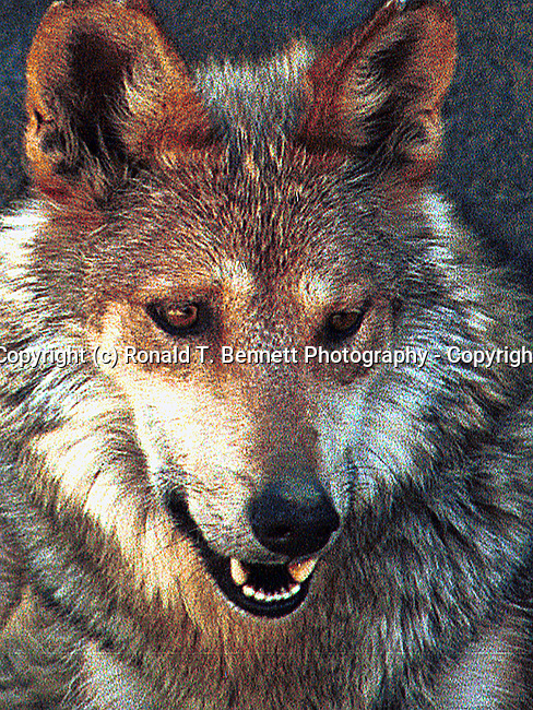 Fine Art Photography by Ron Bennett