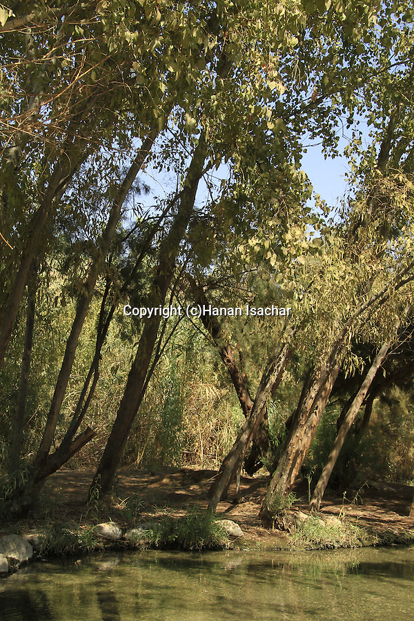 Dead Sea Valley, Euphrate Poplar trees at Einot Tzukim National Park