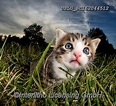 REALISTIC ANIMALS, REALISTISCHE TIERE, ANIMALES REALISTICOS, cats, paintings+++++,USLGSC162044512,#A#, EVERYDAY ,photos,fotos,pounce,cat,cats,kitten,kittens,Seth