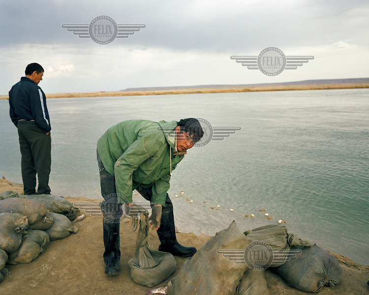 Fish is loaded into sacks on the banks of the Kokaral dyke. The construction of a 13km dyke and dam at the foot of the Northern Aral has caused water levels to rise 12 metres from its lowest level in 2003. And with the increased water, its salinity has dropped, meaning that fish are now in sufficient numbers to make fishing viable.
