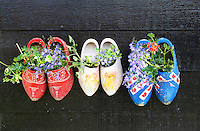 The Netherlands, Zaanse Schans, 2015 06 03.  Cloggs with flowers