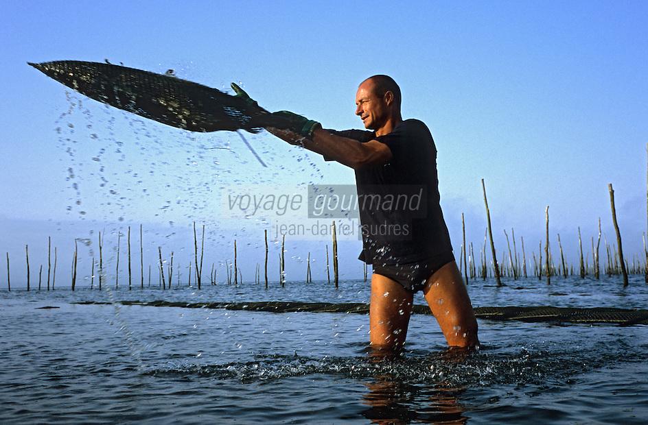 Europe/France/Aquitaine/33/Gironde/Bassin d'Arcachon/Ares: Avec Eric Dauges ostréiculteur sur les parcs à Huitres -Travail sur les poches d'Huitres