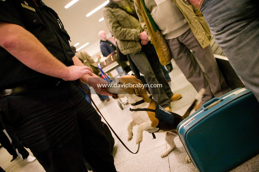 11 April 2006 - New York City, NY - 3 year-old Beagle Alexandra, aka Alex, receives a reward from her handler, officer Jim Amstrong of the K9 unit of the Agricultural division of the Custom and Border Protection agency, after making a find of illegally imported food amongst passengers' luggage at the JFK airport in New York City, US, 11 April 2006. Photo Credit: David Brabyn.