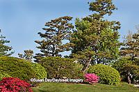 65021-03507 Japanese Garden in spring, Missouri Botanical Gardens, St Louis, MO