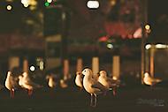 Image Ref: M130<br /> Location: Swanston St, Melbourne<br /> Date: 14th June 2014