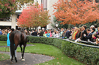 Kiss in the Forest in the paddock before winning the 8th race.  Scenic Keeneland Fall.  October 20, 2012.