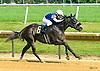 Blu Moon Ace winning at Delaware Park on 7/20/17