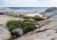 Blommor bland klippor och hällar vid havet vid Huvudskär i Stockholms skärgård. / Flowers among cliffs and rocks by the sea at Huvudskär in the Stockholm archipelago Sweden.