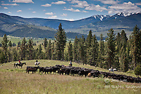 Photos and Pictures of Cowboys riding roping ranching rounding up cattle in montana Cowboys working and playing. Cowboy Cowboy Photo Cowboy, Cowboy and Cowgirl photographs of western ranches working with horses and cattle by western cowboy photographer Jess Lee. Photographing ranches big and small in Wyoming,Montana,Idaho,Oregon,Colorado,Nevada,Arizona,Utah,New Mexico.