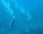 "Divers emerge above the reef at the end of our dive.  ""The Garden"" dive site, Costa Maya, Mexico."
