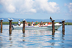 Tourists Viewing Birds, Haitises National Park