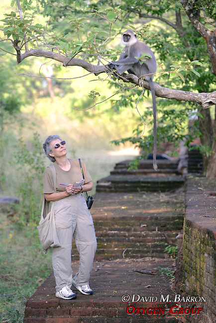 Gail Cohen Observing Hanuman Langur