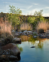A seasonal stream runs in springtime in Catalina State Park, north of Tucson, Arizona.