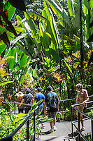 Tourists on the boardwalk near large heliconia plants at the Hawai'i Tropical Botanical Garden, Onomea, Big Island of Hawai'i.