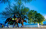 LOUISVILLE, KENTUCKY - APRIL 29: Game Winner, trained by Bob Baffert, walks shed row before heading to the track to exercise in preparation for the Kentucky Derby at Churchill Downs in Louisville, Kentucky on April 29, 2019. Scott Serio/Eclipse Sportswire/CSM