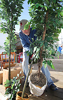 NWA Democrat-Gazette/DAVID GOTTSCHALK  Ken Earhart, a volunteer at the Potter's House Thrift Store, stands up a group of donated artificial trees Tuesday, January 8, 2019, on the loading dock at the store in Fayetteville. The non profit prices and reduces and discounts the price of items based on the length of time they are in inventory. Funds raised go to the ministry of Potter's House.