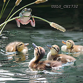 CHIARA,REALISTIC ANIMALS, REALISTISCHE TIERE, ANIMALES REALISTICOS, paintings+++++,USLGCHI732,#A#, EVERYDAY ,photos