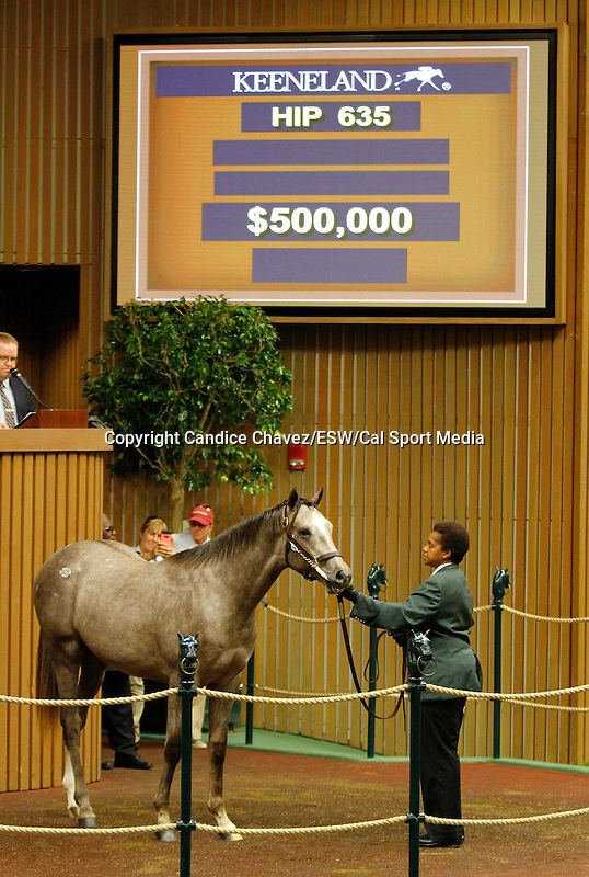September 16, 2015: Hip 635 Tapit - So Probable colt consigned by Taylor Made Sales.  Candice Chavez/ESW/CSM