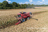 63801-12308 Harvesting corn in fall-aerial  Marion Co. IL