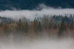 Sauk River, Washington