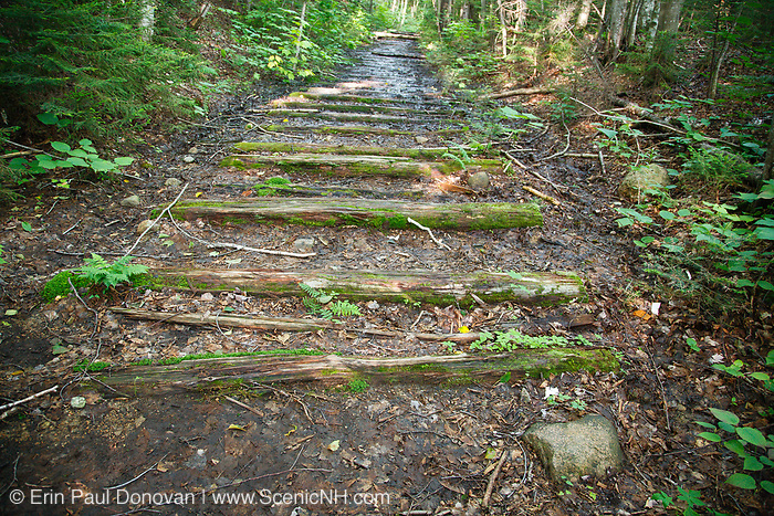 Old railroad ties along the Cedar Brook Branch of the East Branch & Lincoln Railroad in the Pemigewasset Wilderness of Lincoln, New Hampshire USA. The East Branch & Lincoln was a logging railroad, which operated from 1893-1948.