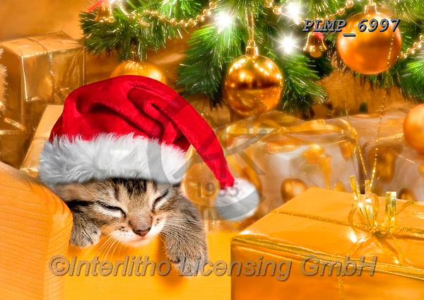 Marek, CHRISTMAS ANIMALS, WEIHNACHTEN TIERE, NAVIDAD ANIMALES, photos+++++,PLMP6997,#xa# ,kittens,cats
