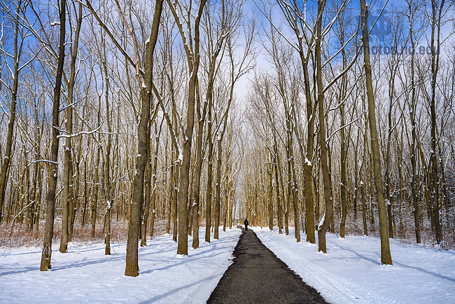 February 13, 2020; Rows of trees on north campus after a snowfall. (Photo by Barbara Johnston/University of Notre Dame)