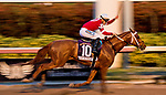 HALLANDALE BEACH, FL - JANUARY 27: Gun Runner #10, with Florent Geroux riding, wins the Pegasus World Cup Invitational Stakes Race on Pegasus World Cup Invitational Day at Gulfstream Park Race Track on January 27, 2018 in Hallandale Beach, Florida. (Photo by Scott Serio/Eclipse Sportswire/Getty Images)